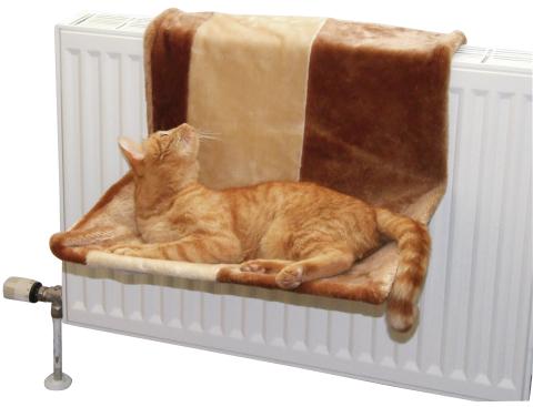 Dieren > Katten > Manden-Kussens